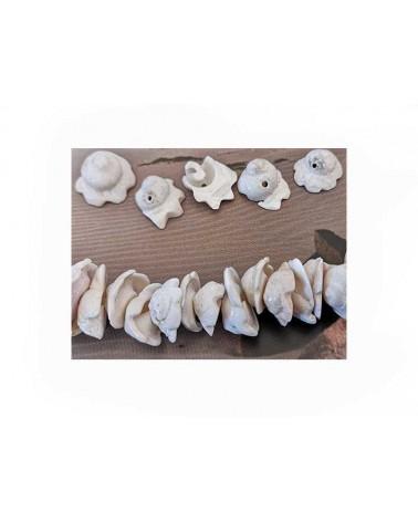 "Coquillage ""porcelaine"" blanc 16-20mm x3"
