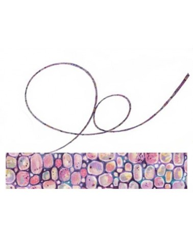 Cordon tissu liberty Moriss C x 20cm
